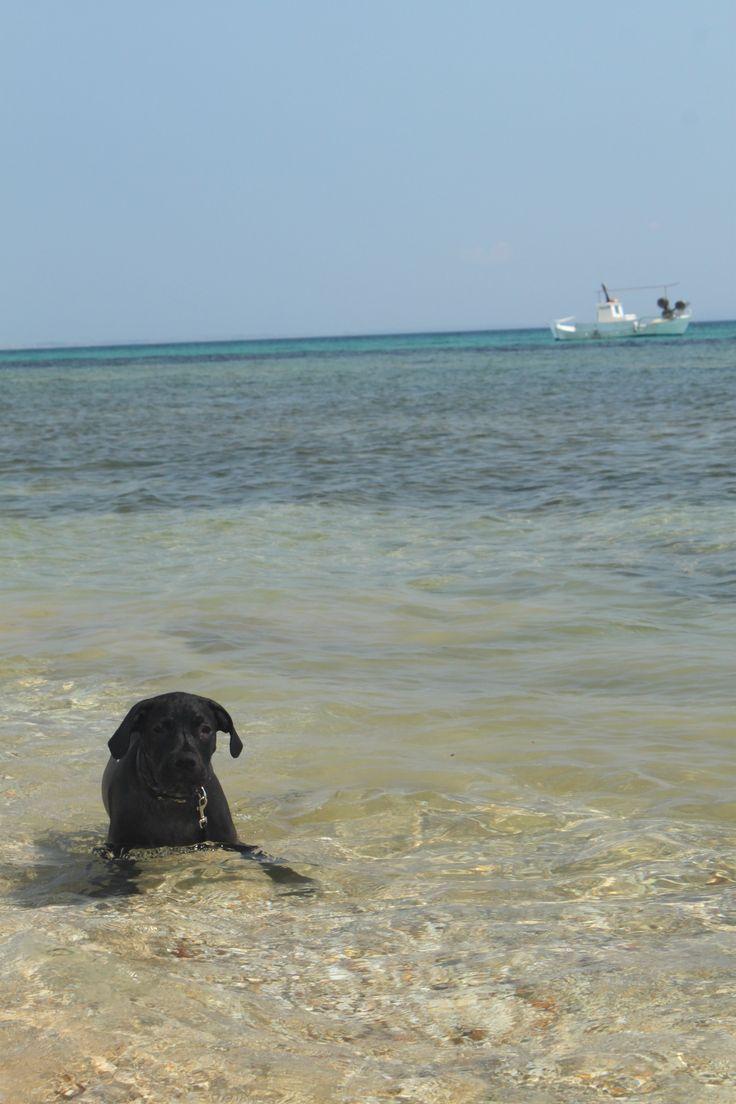#staffie #sea #summer * Anita Kostopoulou Photography *