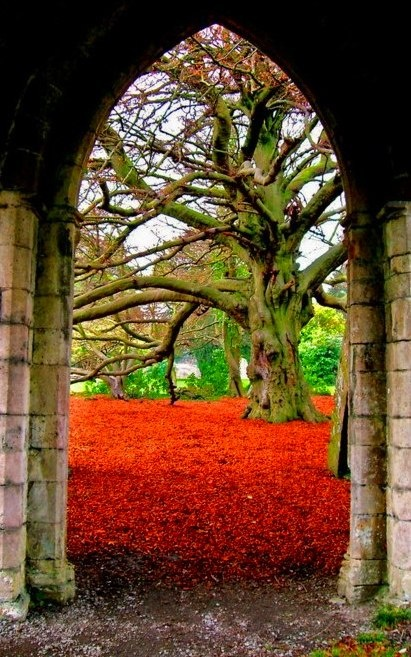 I want to walk through this arch and sit under this tree.