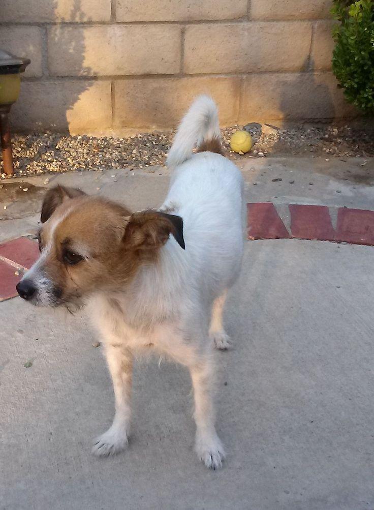 Craigslist Los Angeles Small Dogs