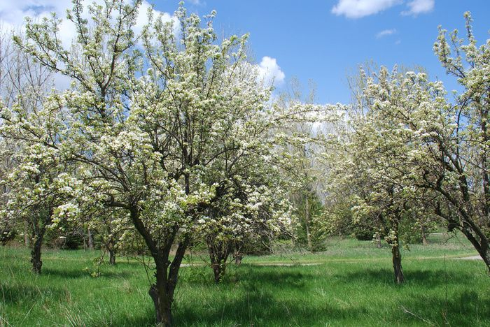 Seedling Trees from Your State. Official state nurseries offer tree seedlings, perfectly suited for your state's climate, for significantly cheaper than you could buy them from a private nursery.