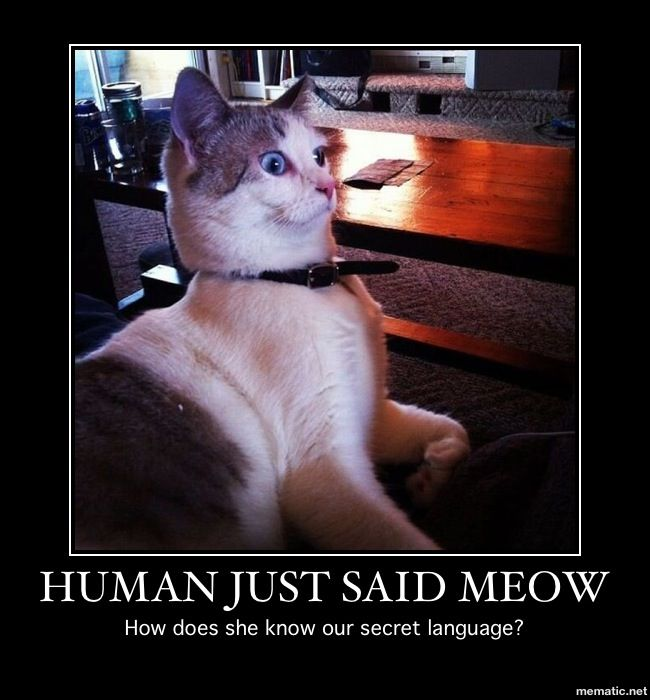 Funny Meme Faces Human : Best cat lovers images on pinterest funny animals