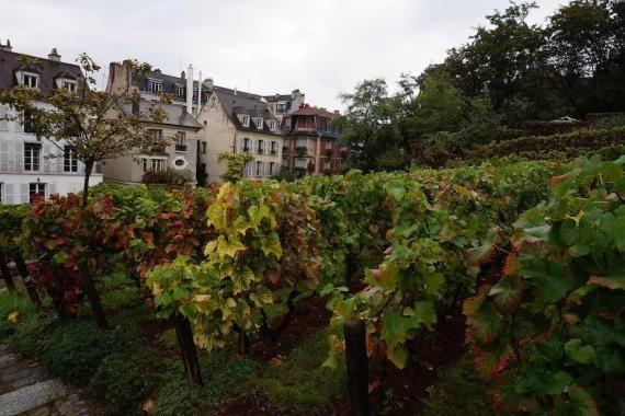 Le Rallye des Vignerons    Partez à la découverte de Montmartre en participant à notre grand challenge œnologique. Les différentes équipes s'affronteront au cours d'ateliers ludiques et seront amenées à relever des « défis vignerons ».    Evénement organisé dans le cadre de la Fête des Vendanges de Montmartre, en partenariat avec Oenodyssée    Dimanche 15 octobre à 14h30 – Tarif : 45€