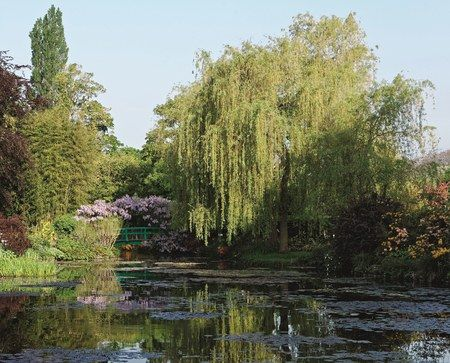 Monet often painted water lilies from one of his two Japanese bridges. In May, the structures are covered in white and lavender wisteria | archdigest.com