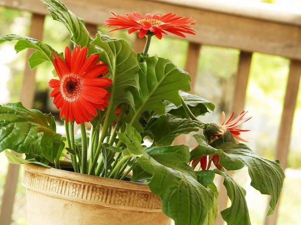 Растения в доме15 комнатных растений, улучшающих воздух