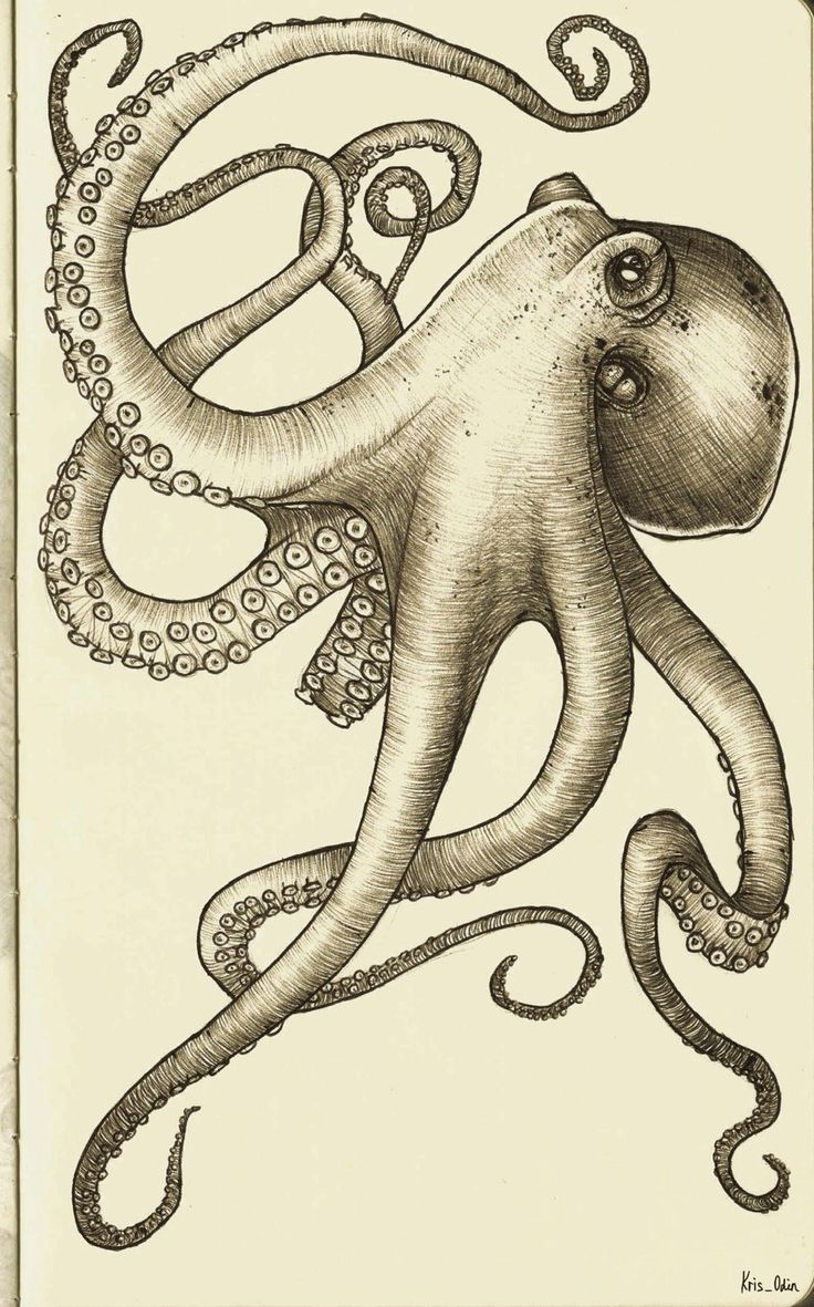 66 best Octopus Drawings Photos images on Pinterest Octopuses