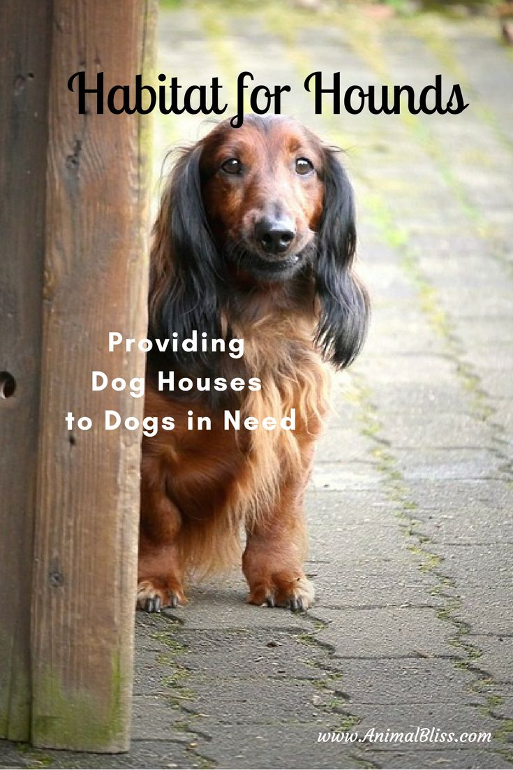 Habitat for Hounds is all about getting warm insulated dog houses to dogs in need. Or, pay a pittance and get detailed plans to build your own