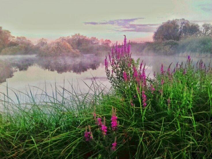 Lake with gorgeus flowers #lakes #flowers #lakephotos #photos #photography