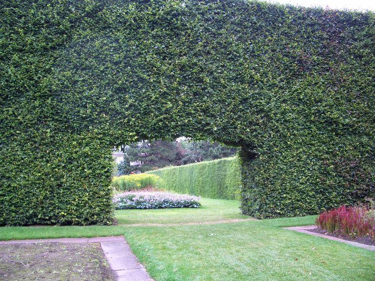 Historische groene beukenhaag (Fagus sylvatica) in de botanische tuinen van Edinburgh, Schotland