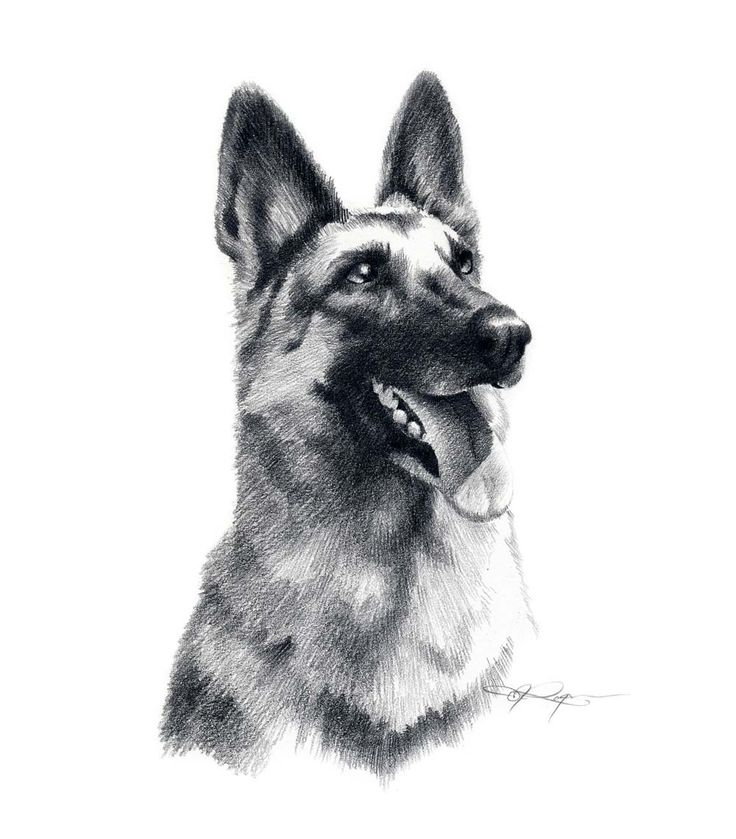 388 best GSD drawings & paint images on Pinterest | German ...