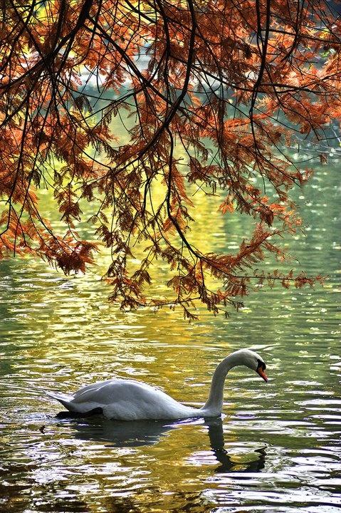 Lago nel Parco di Monza