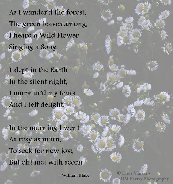 Scent of Wildflowers 3-Fine Art Photography by Erica Massaro {EDMPoetryPhotography} on Etsy- | Wildflowers | Flowers | Garden | Spring | Meadows | Summer | Nature | William Blake Poem | Poetry and Prose | Inspiration |