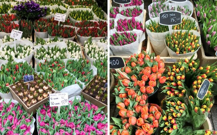 Bloemenmarkt Amsterdam in spring - amsterdam weekend city break