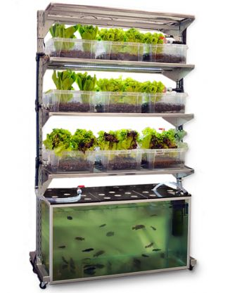 Tis is a great interior design for mobile home owners who desire to raise vegetables and enjoy raising fish at the same time.  Goldfish are perfect candidates for this system.  iMobileHomes heartily recommends mobile home owners consider this idea for growing food year round.