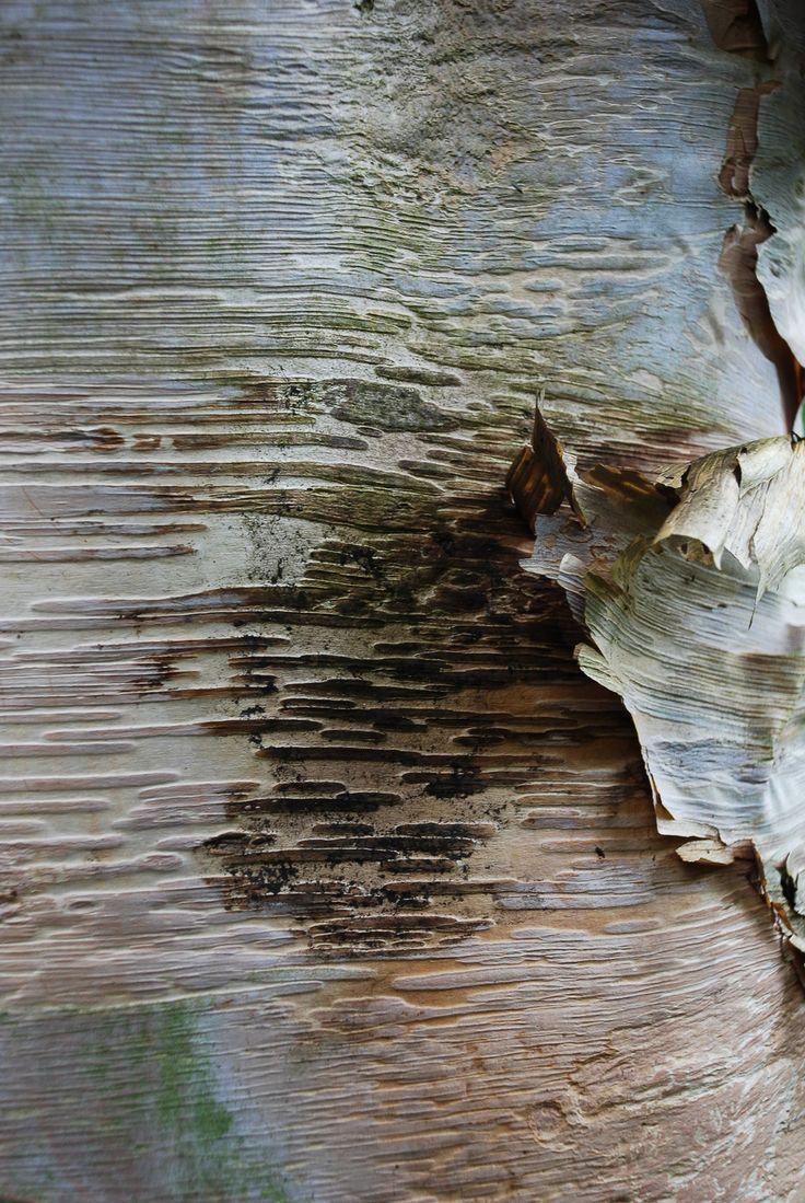 birch bark Helen Terry-4.jpg