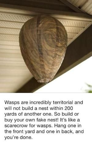 Easily get rid of wasps around your home by LiveLoveLaughMyLife