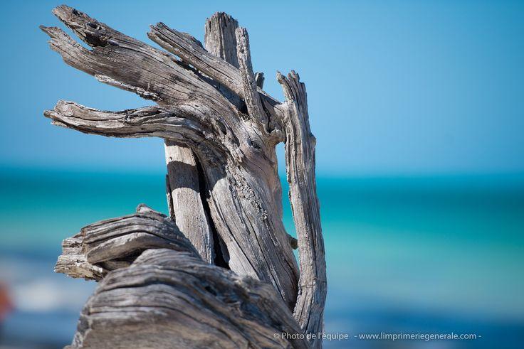 """Nouvelle photo de l'équipe """"Wood of Tanzanie"""" / Impression dépliant 3 volets http://www.limprimeriegenerale.com/depliant"""