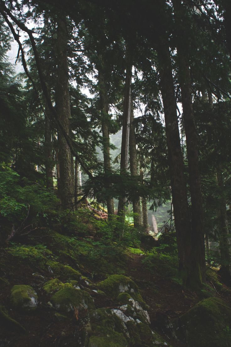 Of Forests and Trees