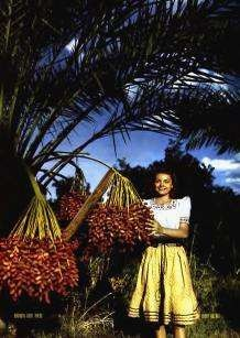 Palm Trees Spiritual Good-Goods of the Spiritual Church