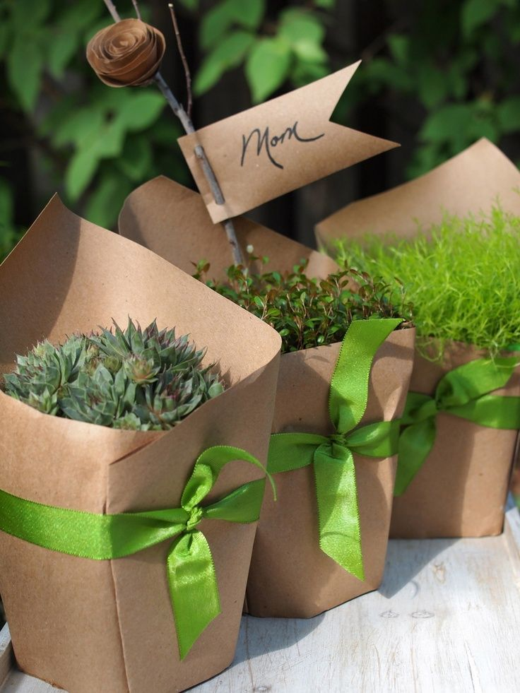 wrap potted plants in craft paper and tie with a pretty ribbon. Great party or wedding favor.