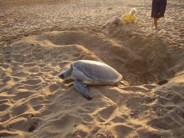North Cyprus marine Turtle coservation project