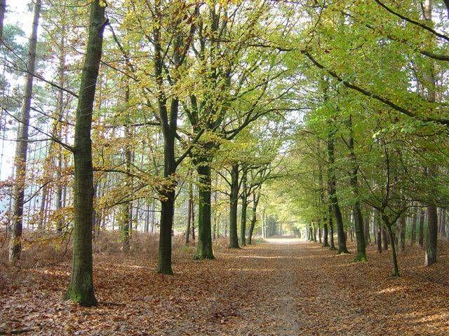 Lembeekse bossen - Oost-Vlaanderen
