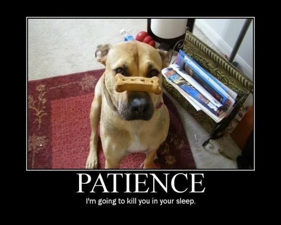 "The art of ""patience""...Famous Quotes, Laugh, Hilarious Pictures, Patience, Dogs Humor, Funny Stuff, Inspiration Quotes, Boards, Animal"