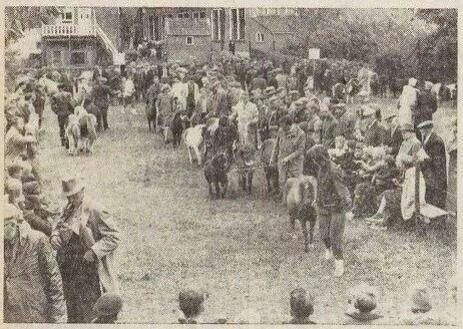 JBEEMA: shetland pony keuring in de jaren '60 op de plaats van de muziektent. Op de achtergrond de Meerplaats.