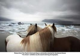 equus by tim flach: At The Beaches, Animal Photography, Timflach, Beautiful Hors, Iceland Hors, Tim Flach, Animal Stories, Hors Photography, Wild Hors