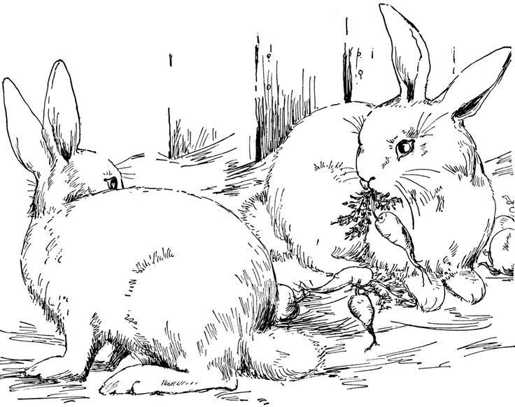 936 best Moonlight and hareskonijntjes images on Pinterest - best of bunny rabbit coloring pages print