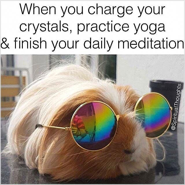 Some Plants Have Powerful Calming And Cleaning Effects And Will Significantly Enhance The Quality Of Your Sleep Healthy Funny Yoga Memes Yoga Funny Yoga Meme