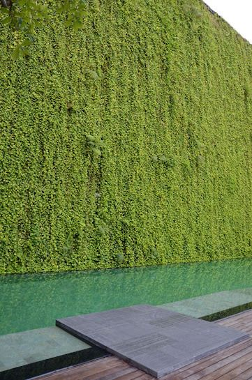 Green wall around a pool