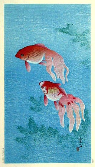 101 best images about garden koi fish ponds on pinterest for Japanese carp fish