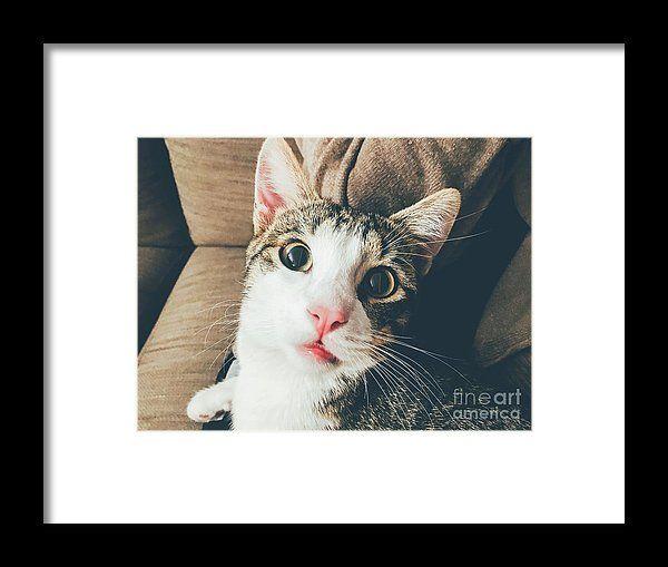 Funny Cute Cat Portrait Closeup Framed Print