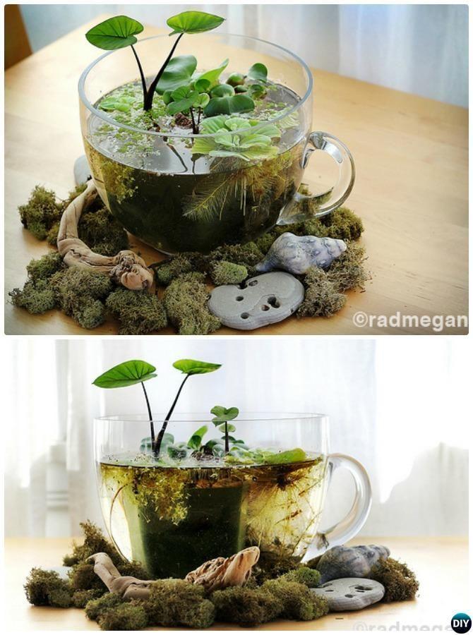Tea Cup Water Terrarium-DIY Mini Fairy Terrarium Garden Ideas