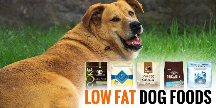Best Dry Food For Overweight Small Dogs