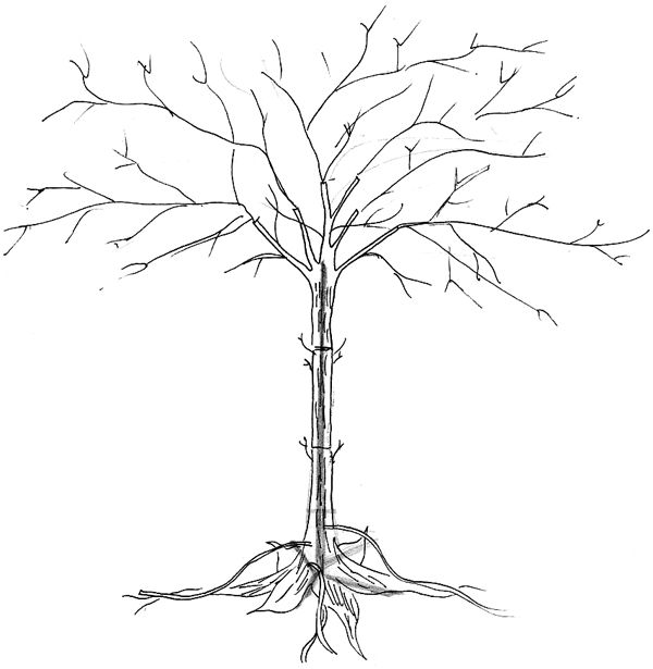 design for a welded tree