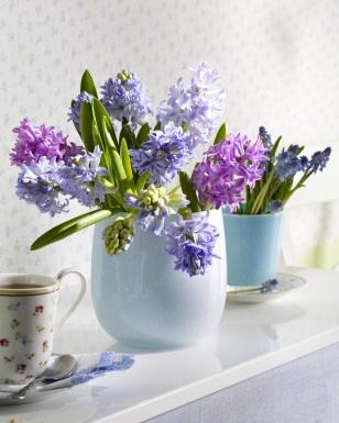 Hyazinthen in hellblauen Glasvasen