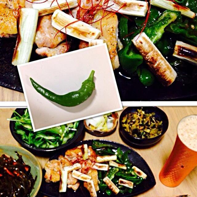 今夜はプランターでやっとなったししとうがメインです! 焼きたて秋刀魚皿は、粘土が縮み過ぎてしっぽがはみ出しちゃいました。(; ̄ェ ̄) - 11件のもぐもぐ - 焼き鳥ししとうと焼きネギ添え by tuttobene