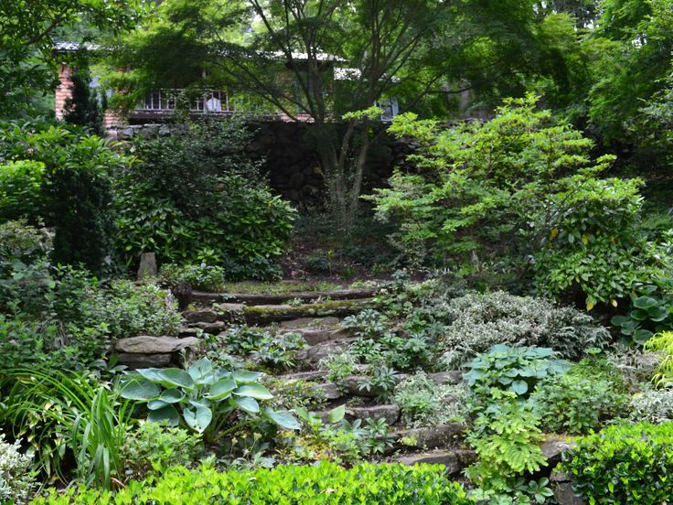 features of woodland landscaping - Google Search