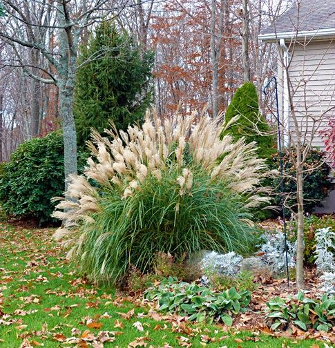 Maiden grass my garden pinterest grasses for Maiden grass landscaping ideas