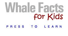 whale facts for kids