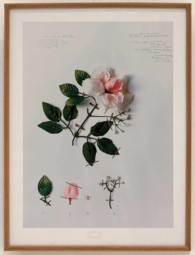 Alberto Baraya,  Una taxonomía para el herbario de plantas artificiales,  2002-2004