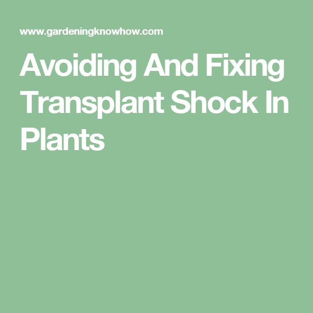 Avoiding And Fixing Transplant Shock In Plants