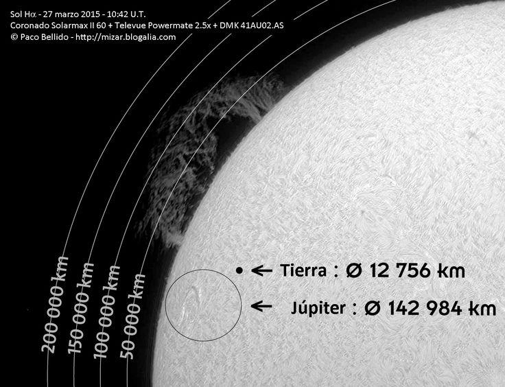 En los tres años que llevo observando el Sol a diario en H-alfa no había visto nada parecido. Llevamos varios días observando una gran protuberancia en el limbo oriental del Sol.  Hoy la gigantesca protuberancia en forma de seto alcanzaba una altura casi equivalente a la mitad de la distancia Tierra-Luna. En su interior habría espacio para abrasar sin problemas 180 planetas como el nuestro. Estas formaciones están provocadas por intensos campos magnéticos casi estables que mantienen flotando…