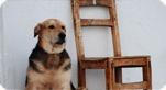 Pétition Pour un nouveau statut juridique de l'animal,campagne Pour un nouveau statut juridique de l'animal :http://www.30millionsdamis.fr/agir-pour-les-animaux/petitions/signer-petition/pour-un-nouveau-statut-juridique-de-lanimal-22.html
