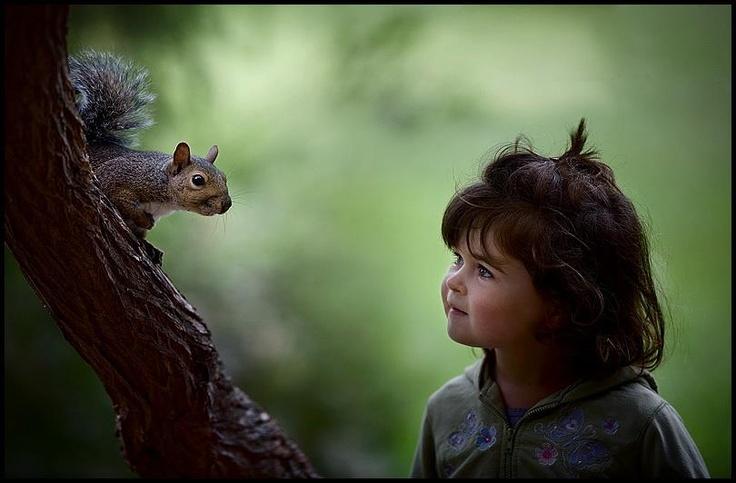mókus -  squirrel