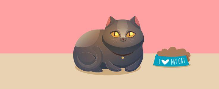 Gatos obesos ¿Cómo lo evito?