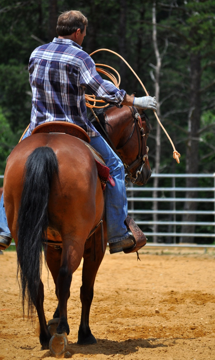 17 Best Images About Horse Training Roping On Pinterest