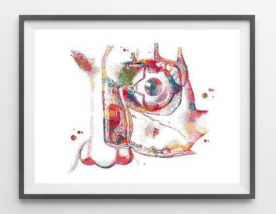 Lacrimal Apparatus watercolor print human eye physiology