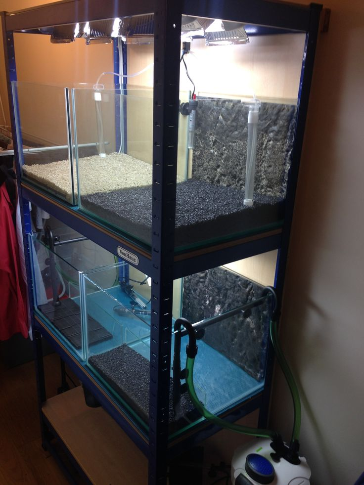 Fish tank breeding rack cosmecol for Racks fish house